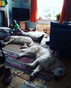 This is a shot of our lounge being very much lived in for LOUNGE LIVING for day 6 of #myhousethismonth . . . . . . #goldenretrieversofinstagram #goldens #allthepooches #interiordesign #interior123 #interiors #instahome #livingroom