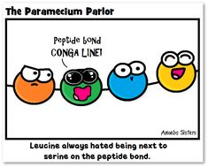 The Paramecium Parlor: Peptide bonds...bonding amino acids whether they like it or not. http://amoebasisters.blogspot.com/