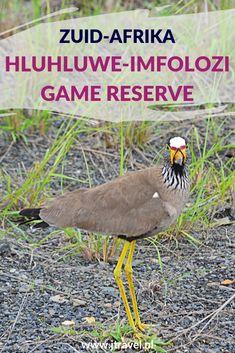De mooiste gamedrive tijdens mijn rondreis door Zuid-Afrika maakte ik in Hluhluwe-Imfolozi Game Reserve. We kwamen oog in oog te staan met een grote kudde olifanten. Meer weten over  Hluhluwe-Imfolozi Game Reserve lees dan verder. Lees je mee? #hluhluweimfolozigamereserve #wildlife #gamedrive #zuidafrika #jtravel #jtravelblog