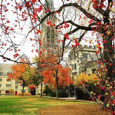 Yale University early fall