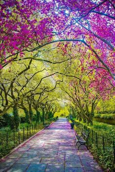 Spring, Central Park, New York City. This picture made me need to go to Central Park in the spring. I already think that it's beautiful, but this is just fantastically so. Beautiful World, Beautiful Places, Wonderful Places, Amazing Things, Simply Beautiful, Beautiful Park, Beautiful Scenery, Absolutely Stunning, Conservatory Garden