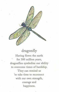Dragonflies look fragile but endure.