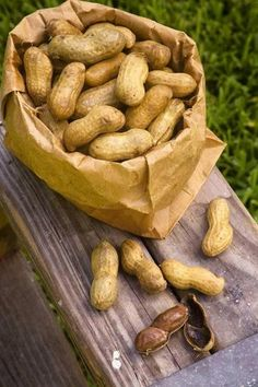 Boiled Peanuts-- Meet the Hardy Family, of Hardy Farms in Hawkinsville, Georgia. They operate a family peanut farm, and are known all over South Georgia for their boiled green peanut stands. Great Recipes, Vegan Recipes, Cooking Recipes, Favorite Recipes, Southern Sweet Tea, Southern Comfort, Southern Living, Boiled Peanuts, How To Make Pizza