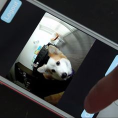 PetBot Connects You to Your Furry Friend While You're Away (August 2015)