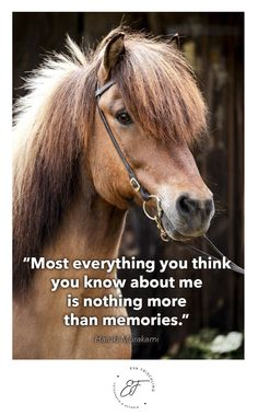 """""""Most everything you think you know about me is nothing more than memories."""" ― Haruki Murakami Quote - Zitat - of the day - horse - iceland"""