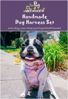 Today we're evaluating the very best damn french bulldog harness money can purchase. Frenchies are infamous leash-pullers and a good harness is the . Small Puppies, Dogs And Puppies, French Bulldog Harness, Pet Dogs, Pets, Dog Leash, Dog Lovers, Cute Animals, Pink Dog