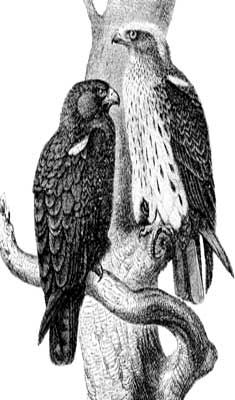 eagle, start on your drawing as soon as possible; while its beautiful ...
