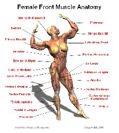 Girls Women Fitness Goals Health club Exercising Workout 6 Package Stomach muscles Muscular massyoung girls routines Best Ab muscles Exercise Get Excess fat-Blasting . Human Body Anatomy, Human Anatomy And Physiology, Muscle Anatomy, Fitness Motivation, Fitness Workouts, Fitness Diet, Wellness Fitness, Muscle Fitness, Female Fitness