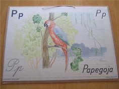 P - Papegoja  Norstedts ABC-bilder, Esselte Stockholm- sig Maj Lindman  Mäter 44 x 32 cm