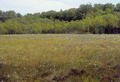 Aktive højmoser.  Højmoseflade. I baggrunden laggskoven. Skidendam, Teglstrup Hegn, Nordsjælland. Foto: Karsten Schnack, Biofoto.  Højmoser er moser, som kun modtager vand gennem nedbør. Moserne består af tuer, som er højereliggende partier med lyng, og høljer, som er lavere, våde dele med tørvemos. Desuden indgår en randzone, kaldet laggen, ofte med træer. Vegetationen domineres af tørvemos. Mosen betegnes som en aktiv højmose, sålænge den har sin naturlige vandbalance. Det betyder, at…