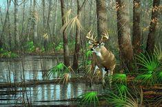 Bayou Buck Whitetail Deer by Michael Sieve Wildlife Paintings, Wildlife Art, Deer Paintings, Whitetail Deer Pictures, Deer Pics, Hunting Art, Deer Hunting, Whitetail Hunting, Turkey Painting