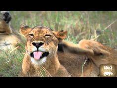 Savanna Private Game Reserve    http://www.rhinoafrica.com