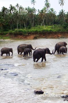 Wayanad, in Kerala, guarantees one of India's finest elephant sightings. It is home to a sizeable population of over 3,000 elephants living in protected wildlife habitats. Elephant corridors connect these forest reserves and offer visitors the chance of exhilarating encounters with herds of elephants, while driving on safari routes or walking on trails into the wild. More at: http://www.rustiktravel.com/Experiences/wayanad-wanderlust/