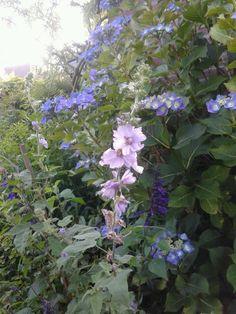 Blauwe bloemenpracht.