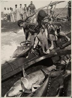 97 Lutadores, Tavira, Algarve, [1943-1945] | Código de referência: PT/AMLSB/ART/050217 Portugal, Algarve, Great Photos, Old Photos, Tuna Fishing, Extraordinary People, Azores, The Old Days, Photo Black
