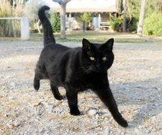 Missing Cat Lived in Pastry Factory for 3 Years Fat Cats, Cats And Kittens, Kitty Cats, I Love Cats, Crazy Cats, Animals And Pets, Cute Animals, Best Friends For Life, Pet Memorials