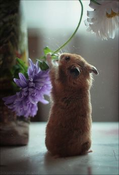 "Hamster moonlights as a floral designer...""Gotta get the stems juuust right..."""