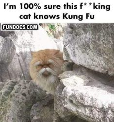 Funny pictures, jokes and funny memes sharing website to make others laugh. Get more funny pictures here. Login and share funny pic to make world laugh. Funny Animal Memes, Funny Animals, Funny Memes, Memes Humor, Cute Cat Memes, Cute Animals With Funny Captions, Silly Memes, Cutest Animals, Animals Images