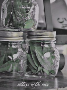 How to bottle your own bay leaves #diy