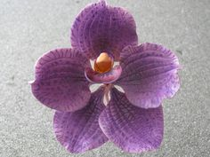 Vanda Orchid by master artist Pilar Gonzalez of Sunflower Sugar Art