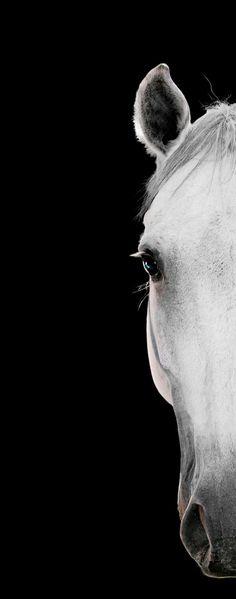Bob Tabor - Horse Portrait 34 1