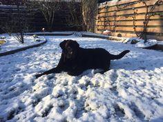Sneeuw!! Dogs, Animals, Animales, Animaux, Pet Dogs, Doggies, Animal, Animais
