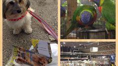 Hunde-Blog: Blümchen on Tour - Haustier Aktuell 2015 Dogs, Animals, Taurus, Meat, Pet Dogs, Animales, Animaux, Doggies, Animal