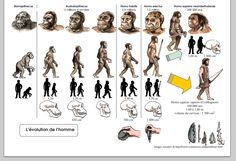 Ce lien est une frise imagée sur l'évolution de l'homme.  L'enseignant peut l'utiliser comme appui à l'étude des différentes populations préhistoriques. Darwin's Theory Of Evolution, Human Evolution, Art History Memes, History Facts, Dna Art, Biology Classroom, Prehistoric World, Primitive Survival, History Teachers