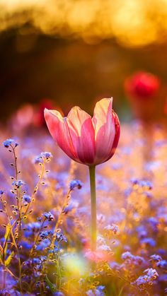 I am very blessed 💖 I have a amazing man and beautiful kids😘 Frühling Wallpaper, Flower Wallpaper, Spiritual Inspiration, God Is Good, Christian Quotes, Gods Love, Flower Power, Beautiful Flowers, Affirmations