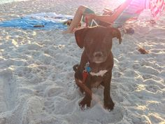 Harleys first trip to the beach