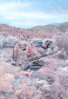 harmony in Japan