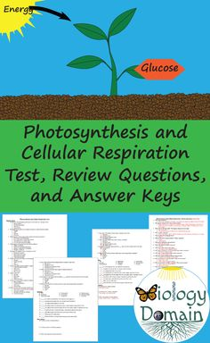 Test and review questions with answer keys covering photosynthesis and cellular respiration Physical Science, Science Education, Science Experiments, Photosynthesis And Cellular Respiration, Rock Cycle, Science Notebooks, Ap Biology, Scientific Method, Middle School Science