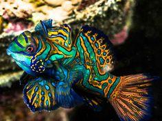 Undersea animal