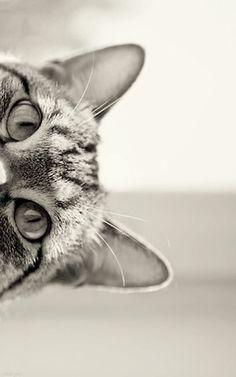 Cat;)