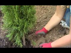 (38) 1-4 Receptář prima nápadů, www.telereceptar.cz, 25.9.2011 - YouTube