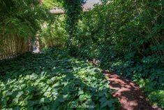 Ateljé Harmoni och Glädje — Almbacken Trädgårdsdesign Plants, Outdoor, Outdoors, Flora, The Great Outdoors, Plant