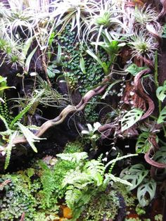 My naturalistic paludarium for Cresteds - Page 8