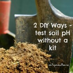 Create a Mini Compost Bin. The best thing you can do for your garden is to add compost and improve the soil. Learn to make a DIY Kitchen Scrap Compost Bin. Organic Gardening, Gardening Tips, Lavender Hedge, Organic Supplies, Permaculture Principles, Heirloom Tomato Seeds, Dried Bananas, Starting Seeds Indoors, Soil Ph