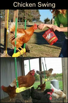 Keep your pet chickens entertained with this chicken swing! Keep your pet chickens entertained with Backyard Chicken Coop Plans, Building A Chicken Coop, Diy Chicken Coop, Chickens Backyard, Chicken Nesting Boxes, Chicken Toys, Chicken Animal, Chicken Swing, Chicken Garden