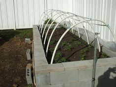 this raised concrete garden can be planted early. If covered with plastic it becomes a mini greenhouse too!  GREAT IDEA!