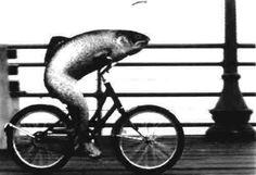 A woman needs a man like a fish needs a bike!