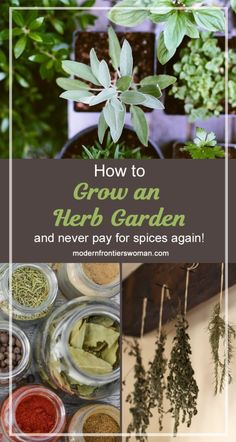 How to grow an herb garden (and never pay for spices again!) Part 2 How to grow an herb garden (and never pay for spices again!) The post How to grow an herb garden (and never pay for spices again!) Part 2 appeared first on Garden Easy. Hydroponic Gardening, Organic Gardening, Container Gardening, Indoor Gardening, Urban Gardening, Outdoor Gardens, Hydroponic Systems, Aquaponics Diy, Mini Gardens