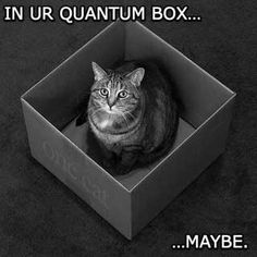 Quantum Cat - World's largest collection of cat memes and other animals Funny Cats, Funny Animals, Animal Memes, Funny Science Jokes, Schrodingers Cat, Kitty Cats, Funny Animal Pictures, Cat Memes, I Love Cats
