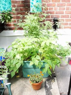 DIY Earthbox from Fresh Food from Small Spaces - an easy way to garden when you have limited space.