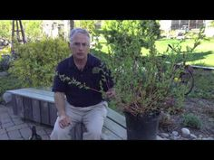 www.Sollecito.com Wet Area Landscaping - What To Plant. To get advice from a Senior NYS Certified Landscaping Professional on how you can design & create sustainable and affordable landscapes visit http://sollecito.com.  #LandscapeDesigns #LandscapeDesigner #BackyardLandscapeIdeas