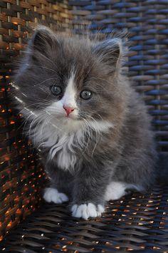 Marvin at his cutest by Camilla Korsnes, via Flickr.com