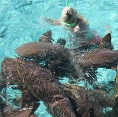 feedingsharks#snorkeling#sharks#thebahamasisland#exuma#travel#nursesharks#thebahamasislands#caribbeanislands#swimming#water#ocean#caribbean#travelling#worldtrip#nurseshark#caribbeantravel#caribbeansea#atlanticocean#worldtraveller#sea#exumas#thebahanas#exumaislans#traveller#caribbeanisland#vacation#worldtravel# by mashafromukraine