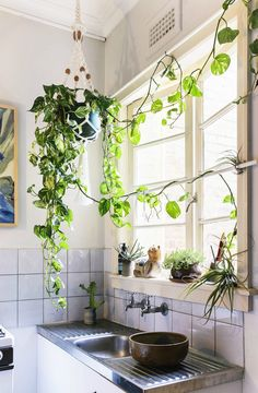 Bright windows, houseplants, industrial apron sink, wall-mounted faucets