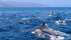 The ride with dolphins. My view from the Flyer leaving Catalina Island. So special.