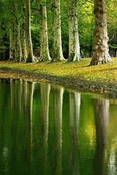 GREEN TREES, WATER REFLECTION GIF